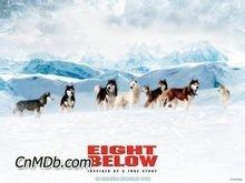 8只雪橇狗讲述的是一个什么故事