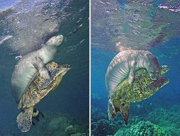 深海巨灵大海龟讲述了一个什么故事