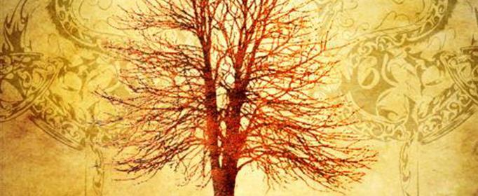 秦岭神树是谁的墓?